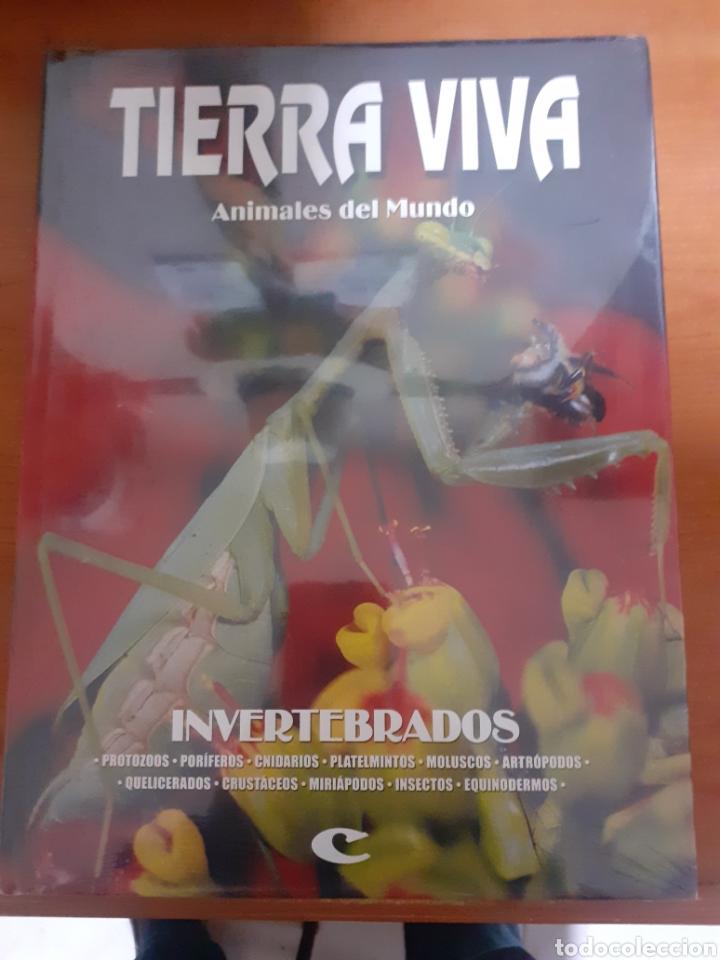 LIBRO TIERRA VIVA INVERTEBRADOS (Libros Nuevos - Humanidades - Geografía)
