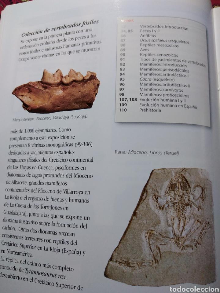 Libros: GUÍA DEL MUSEO GEOMINERO. PALEONTOLOGIA Y MINERALOGÍA. - Foto 2 - 201533831