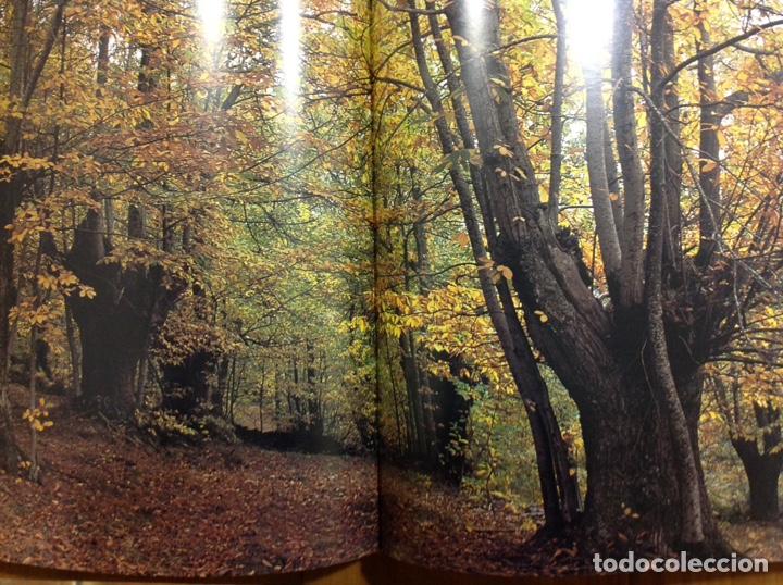 Libros: Patrimonio geológico de Galicia. Enresa. 2004. 31x25x5 cm. Nuevo, impecable. - Foto 7 - 251437450