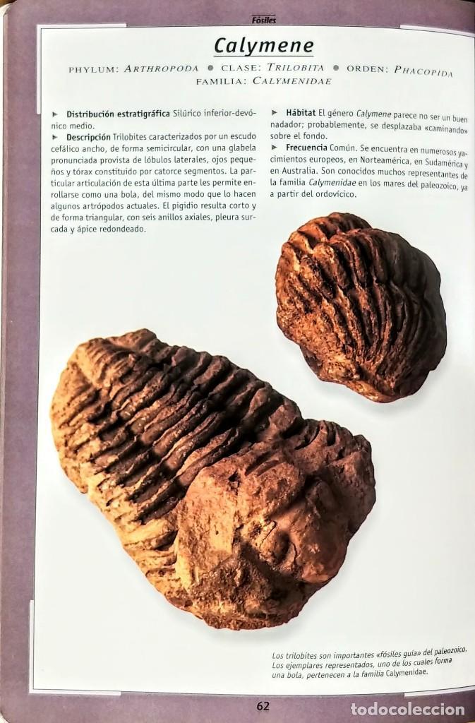 Libros: FOSILES.ROBERTO ZORZIN.SUASAETA - Foto 2 - 254429045