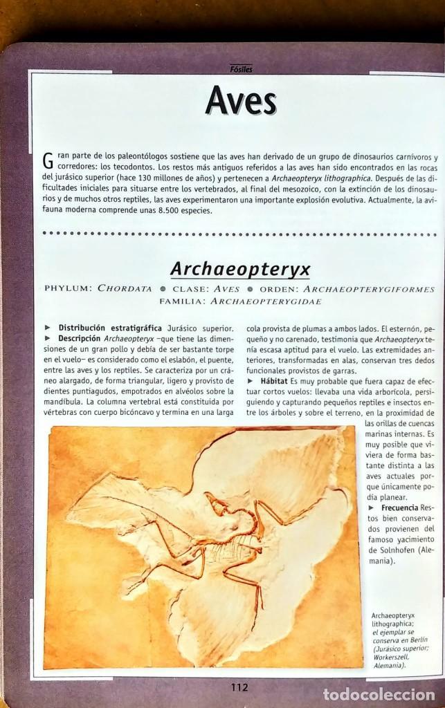 Libros: FOSILES.ROBERTO ZORZIN.SUASAETA - Foto 3 - 254429045