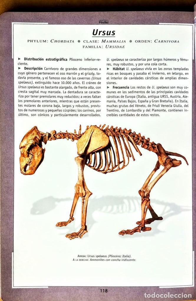 Libros: FOSILES.ROBERTO ZORZIN.SUASAETA - Foto 4 - 254429045