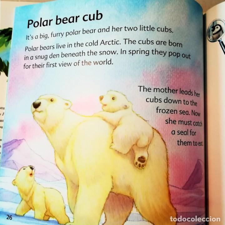Libros: MY FIRST BOOK OF BABY ANIMALS TAPA DURA CON SOBRECUBIERTA - Foto 3 - 183303030