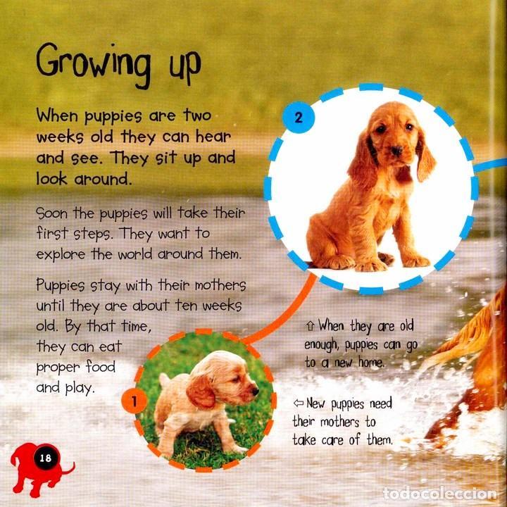 Libros: PUPPY TO DOG TAPA FLEXIBLE - Foto 3 - 184367171