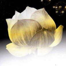 Livres: ADIVINA QUIEN SOY DE MEGAN MAXWELL - PLANETA (NUEVO). Lote 198746167