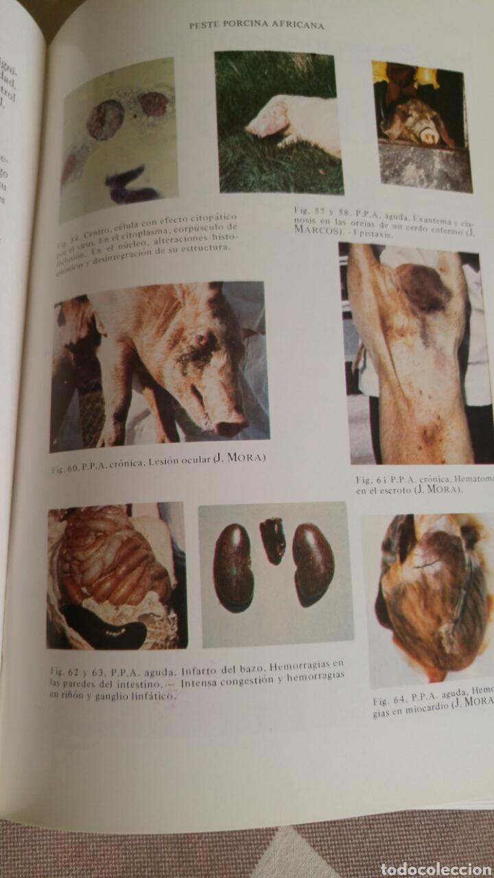 Libros: como nuevo Patología y clínica del ganado porcino 1980 - Foto 4 - 121447850