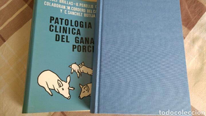 Libros: como nuevo Patología y clínica del ganado porcino 1980 - Foto 2 - 121447850