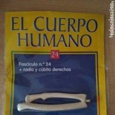 Libros: EL CUERPO HUMANO FASCÍCULO N 24. RBA PRECINTADO NUEVO. Lote 172259754