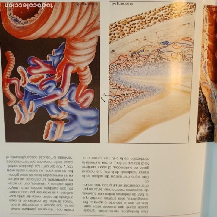 Libros: EXEMPLA ENDOCRINOLOGICA, V.V.A.A., 3 VOLUMENES, MEDICINA / MEDICINE, SCHERING, AULA MEDICA, 1997 - Foto 2 - 243839855