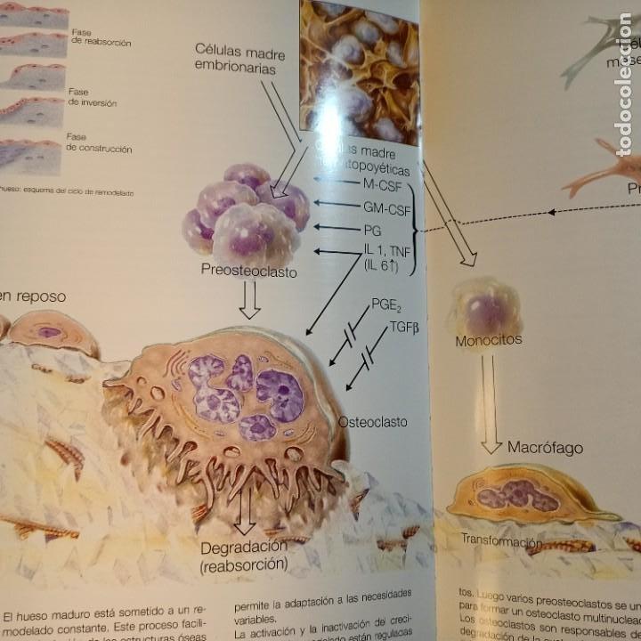 Libros: EXEMPLA ENDOCRINOLOGICA, V.V.A.A., 3 VOLUMENES, MEDICINA / MEDICINE, SCHERING, AULA MEDICA, 1997 - Foto 5 - 243839855