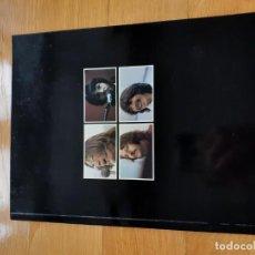 Libros: THE BEATLES. LIBRO GET BACK.. Lote 204077976