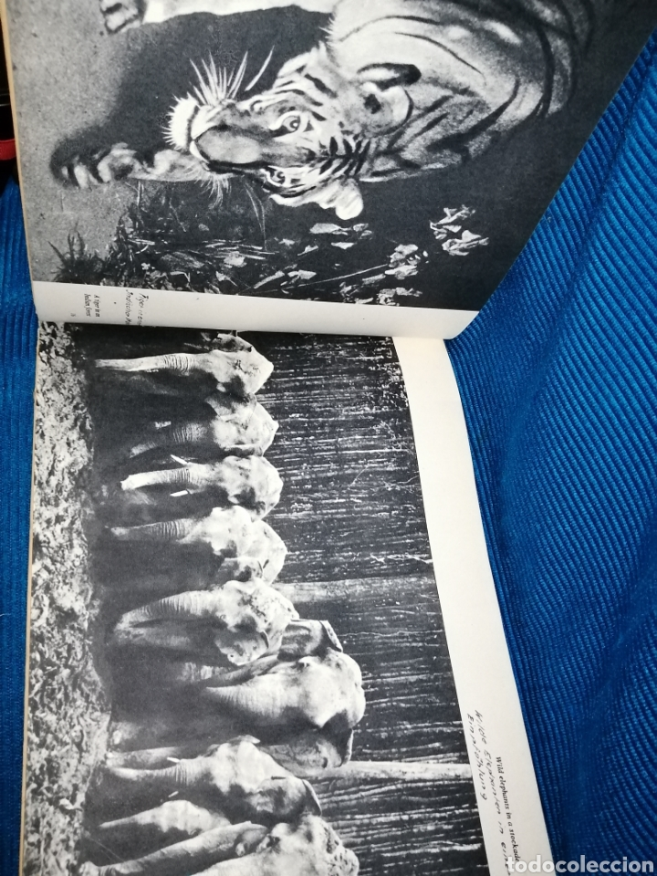 Libros: LIBRO INDIA PICTORIAL SURVEY, 1960, THE PUBLICATIONS DIVISION MINISTRY OF INFORMATION - Foto 6 - 253936445