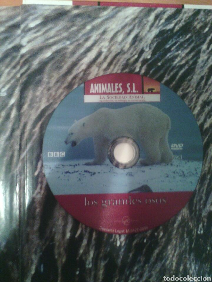 Libros: Animales sl. Vagabundos oportunista osos - Foto 2 - 81208647