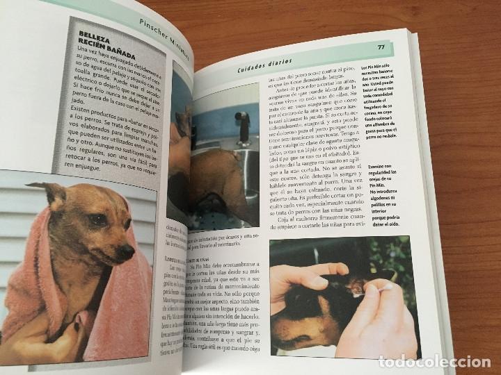 Libros: Libros sobre los perros Pinscher Miniatura - Foto 6 - 181480925