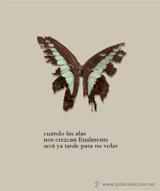 Libros: DAVID HERRANZ : SILENTE (STI ediciones, 2013) - Foto 2 - 38970626