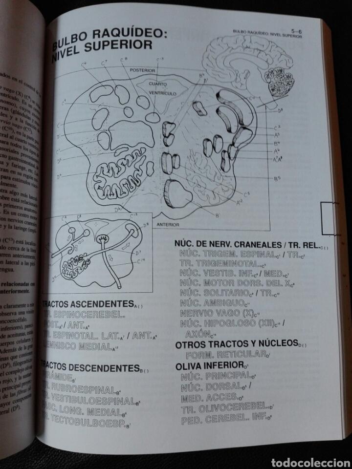 Libros: El cerebro humano. Libro de trabajo Marian C. Diamond | A B Scheibel Lawrence M Elson Libro nuevo - Foto 4 - 198141587