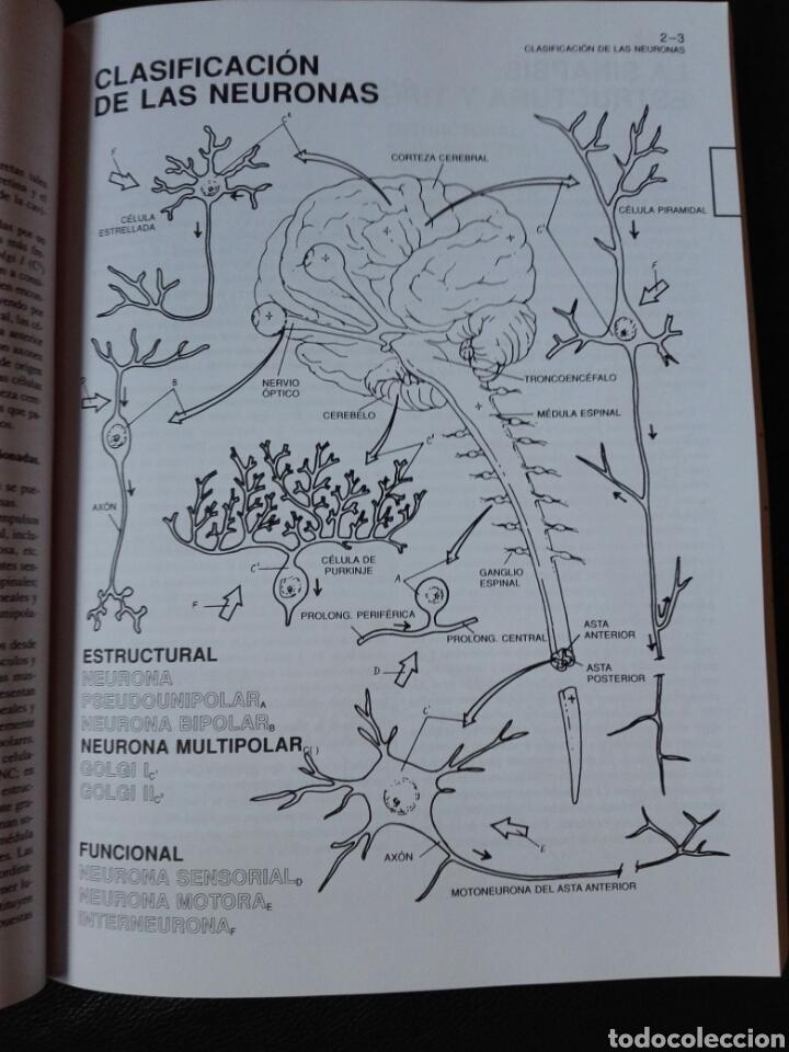 Libros: El cerebro humano. Libro de trabajo Marian C. Diamond | A B Scheibel Lawrence M Elson Libro nuevo - Foto 5 - 198141587