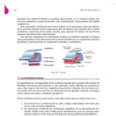 Libros: MASAJE METAMÉRICO, PEQUEÑOS ESTÍMULOS CON GRANDES EFECTOS POR JUAN R. VILLAVERDE. Lote 195953011