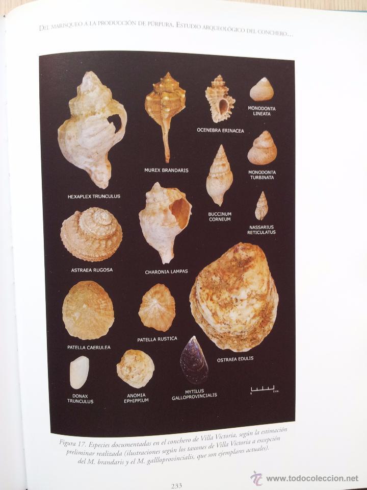 Libros de segunda mano: ARQUEOLOGIA DE LA PESCA EN EL ESTRECHO DE GIBRALTAR - D. BERNAL CASASOLA - Foto 4 - 54169364