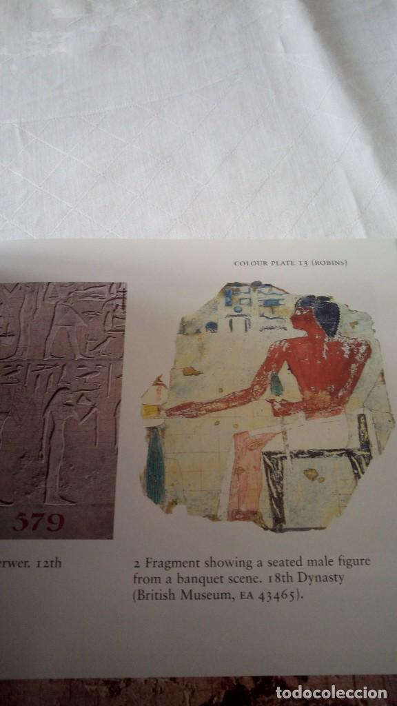 Libros de segunda mano: CTC - COLOUR AND PAINTING IN ANCIENT EGYPT - W.V. DAVIES - MUSEO BRITÁNICO - IDIOMA INGLÉS - Foto 8 - 147693950