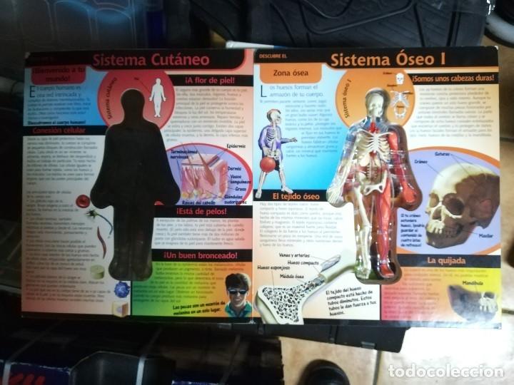 Libros de segunda mano: CUERPO HUMANO AL DESCUBIERTO. CON PEQUEÑA MAQUETA TRIDIMENSIONAL - Foto 6 - 178387912