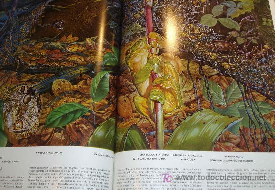 Libros de segunda mano: LAS MARAVILLAS DE LA VIDA. LIFE. EDIT. LUIS MIRACLE. 3ª EDICION 1968 - Foto 2 - 23060092