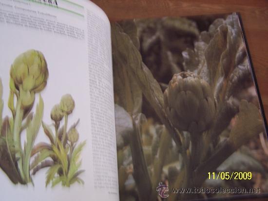 Libros de segunda mano: GUÍA PRÁCTICA DE LAS PLANTAS MEDICINALES Y LA SALUD Y COCINA NATURAL-6 TOMOS-EDITORS-1994 - Foto 5 - 25077543