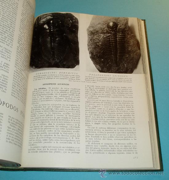 Libros de segunda mano: HISTORIA NATURAL. TOMO IV. GEOLOGÍA - Foto 5 - 25136774