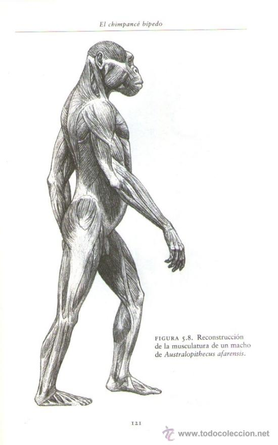 Libros de segunda mano: ILUSTRACIONES BLANCO Y NEGRO - Foto 2 - 30814710