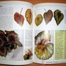 Libros de segunda mano: LIBRO DE WILLIAM DAVIDSON MANUAL PRÁCTICO PARA EL CUIDADO DE LAS PLANTAS DE INTERIOR. Lote 73417429