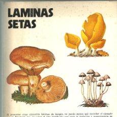 LAMINAS SETAS DR DON JUAN ANTONIO SEOANE CAMBA LABORATORIO EMYFAR 1976