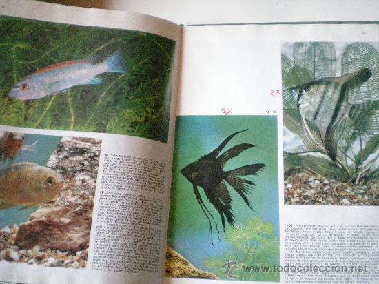 Libros de segunda mano: peces de acuario editorial teide s.a.barcelona instituto geografico de agostini de 64 paginas ilustr - Foto 4 - 33523562