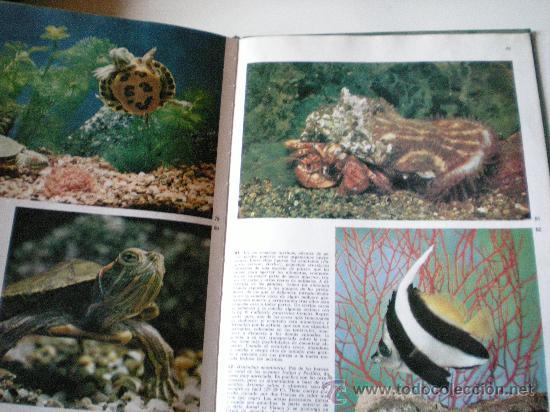 Libros de segunda mano: peces de acuario editorial teide s.a.barcelona instituto geografico de agostini de 64 paginas ilustr - Foto 5 - 33523562