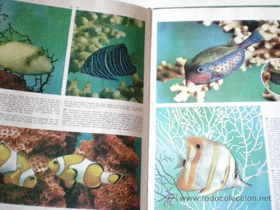 Libros de segunda mano: peces de acuario editorial teide s.a.barcelona instituto geografico de agostini de 64 paginas ilustr - Foto 6 - 33523562