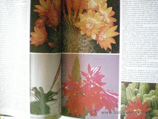 Libros de segunda mano: plantas y flores en casa año 1978 editorial HMB, S.A. provenza barcelona - Foto 3 - 33524756