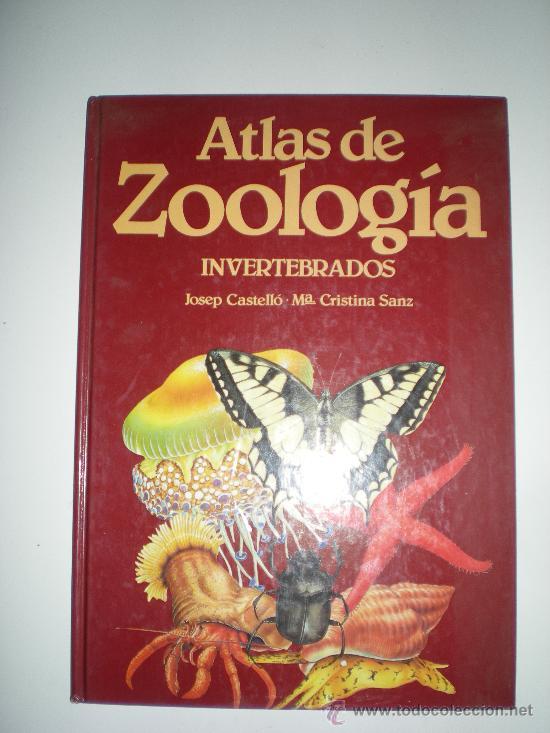 ATLAS DE ZOOLOGIA INVERTEBRADOS DE JOSE CASTELLO Y MARIA CRISTINA SANZ (Libros de Segunda Mano - Ciencias, Manuales y Oficios - Biología y Botánica)
