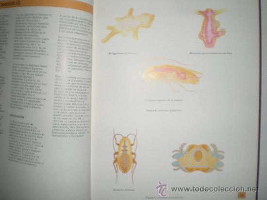 Libros de segunda mano: atlas de zoologia invertebrados de jose castello y maria cristina sanz - Foto 2 - 33543126