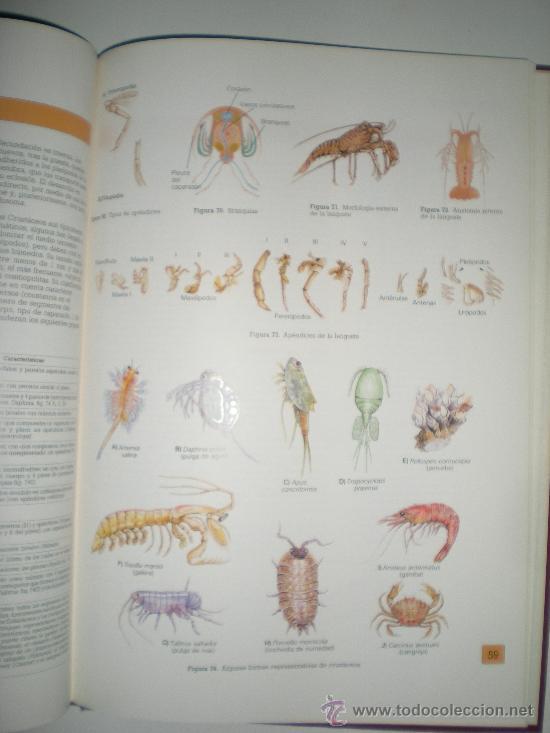 Libros de segunda mano: atlas de zoologia invertebrados de jose castello y maria cristina sanz - Foto 3 - 33543126