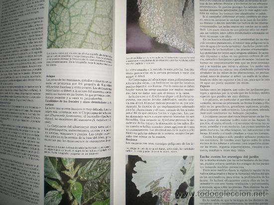 Libros de segunda mano: gran enciclopedia de la jardineria ediciones susaeta año 1989 - Foto 4 - 33543727