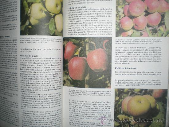 Libros de segunda mano: gran enciclopedia de la jardineria ediciones susaeta año 1989 - Foto 5 - 33543727