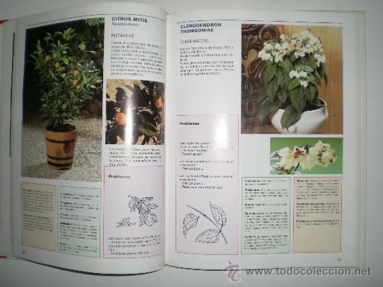 Libros de segunda mano: para el cuidado de las plantas de interior susaeta - Foto 3 - 33544806