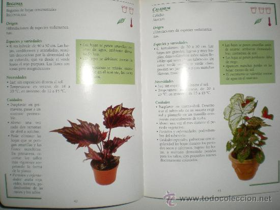 Libros de segunda mano: tu jardin conocer y cuidar las plantas de interior muchas ilustraciones variedades en color susaeta - Foto 3 - 33549258