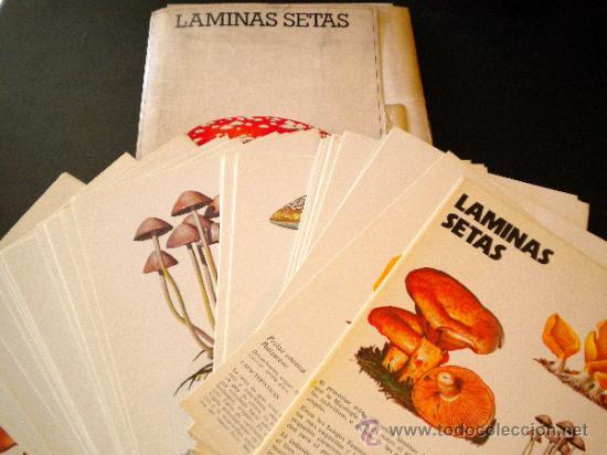 58 LAMINAS SETAS LABORATORIO EMYFAR 1976 / SEOANE CAMBA (Libros de Segunda Mano - Ciencias, Manuales y Oficios - Biología y Botánica)
