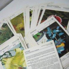 Libros de segunda mano: LOTE 92 FICHAS SALVAT AÑO 1979 - PLANTAS BOTANICA. Lote 37679241