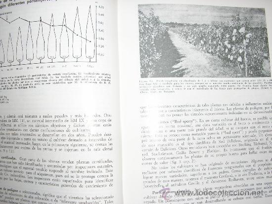 Libros de segunda mano: FRUTICULTURA MODERNA (TOMO 1), por Norman Childers - Edit. Hemisferio Sur - URUGUAY - RARO! - Foto 5 - 38705347