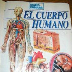 Libros de segunda mano: LOTE DE 26 EJEMPLARES ENCUADERNADOS DE EL CUERPO HUMANO - ARGENTINA - 1993 - RARO!. Lote 38914254