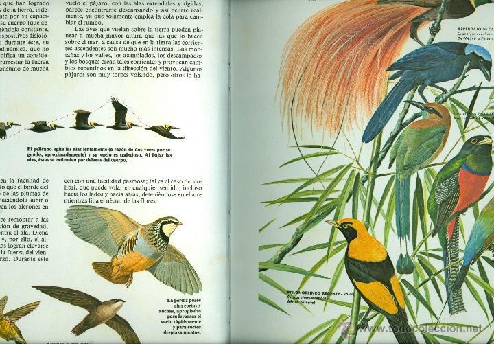 Libros de segunda mano: AVES , FAUNA MUNDIAL - VOLUMEN 3 - ERNESTO PEREZ MAS (TAPA DURA 22x30 cm.) - Foto 2 - 41110388