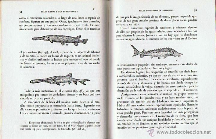 Libros de segunda mano: PECES RAROS Y SUS CURIOSIDADES A. HYATT VERRILL 1962 - Foto 2 - 43476615