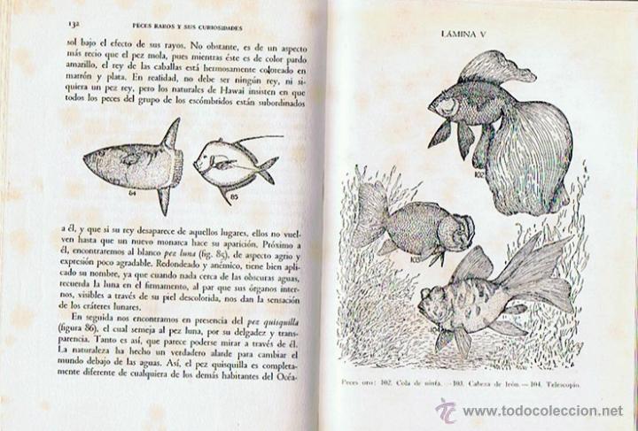 Libros de segunda mano: PECES RAROS Y SUS CURIOSIDADES A. HYATT VERRILL 1962 - Foto 3 - 43476615