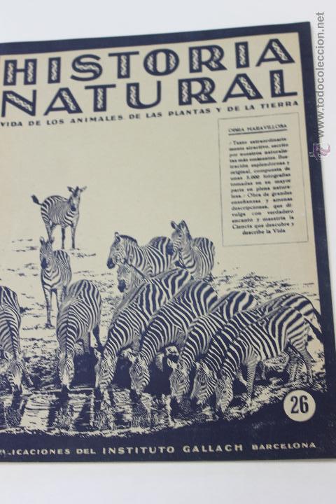 HISTORIA NATURAL BOTANICA,Nº 26 INTITUTO GALLACH BARCELONA (Libros de Segunda Mano - Ciencias, Manuales y Oficios - Biología y Botánica)